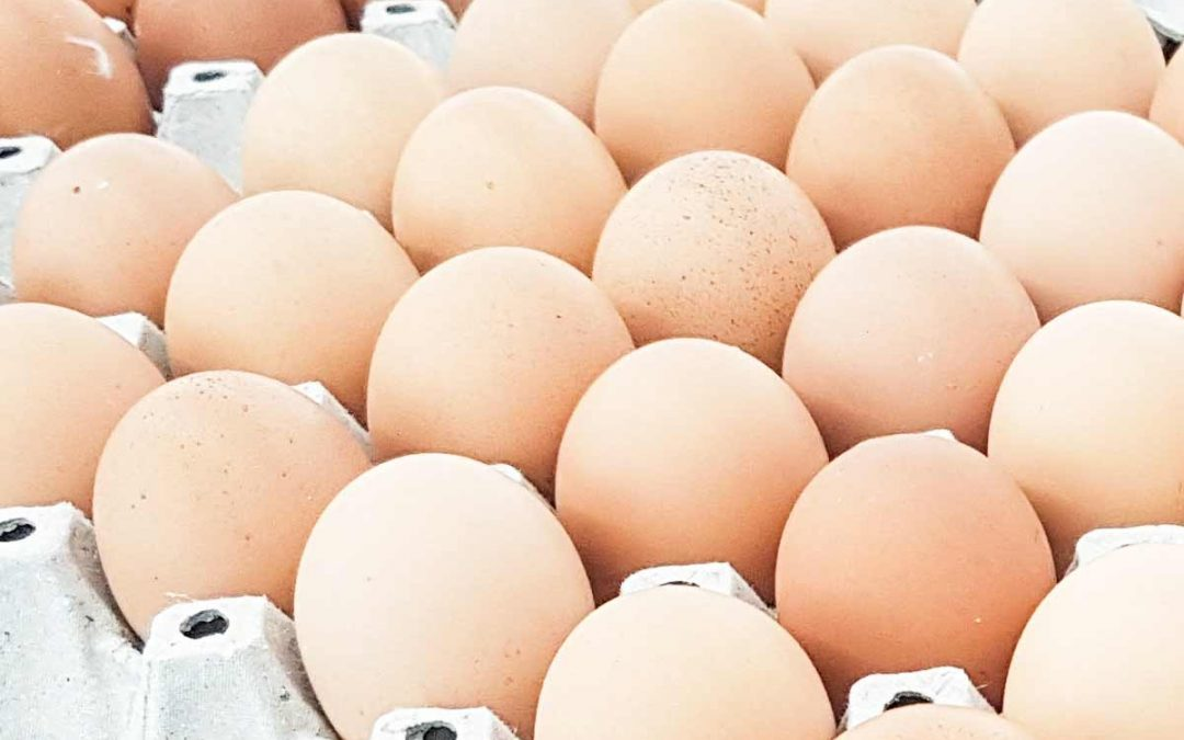 Cracking the Mysteries of Eggshell Nanostructure